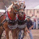horsepull1